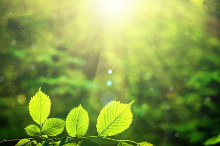 RBoles forestales hojas en la luz del sol fondos. Foto de archivo - 38423630
