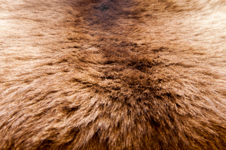 hair tuft: fur texture close-up background on the white backgrounds Stock Photo