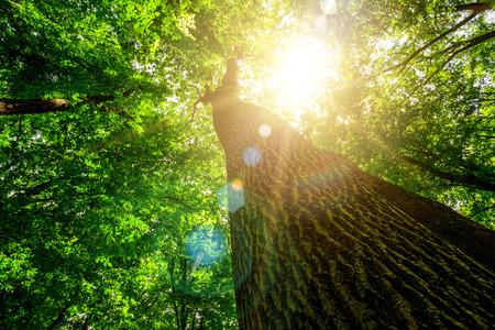 bos bomen. natuur groen hout, zonlicht achtergronden.