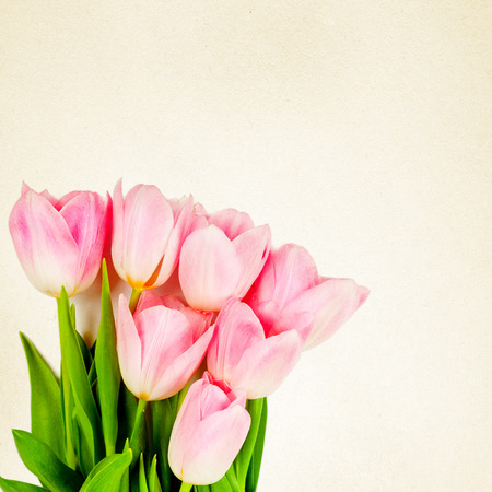tulip: bouquet of tulips on a white background for advertising Stock Photo