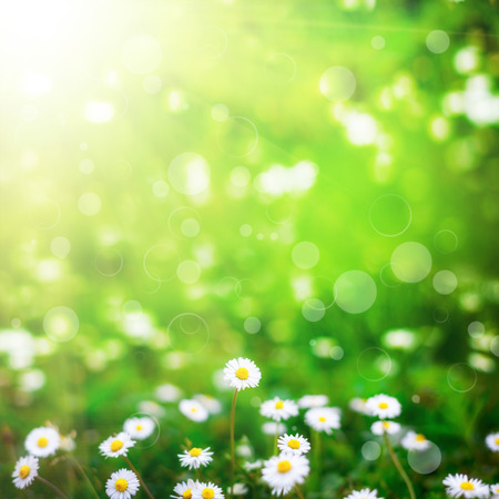 jardines con flores: campo de flores en el cielo. naturaleza abstracta Foto de archivo