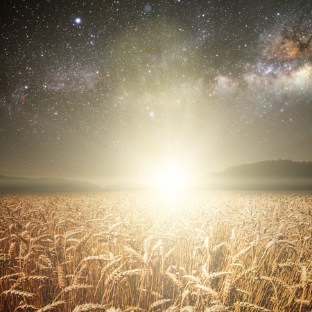 field of grass. meadow wheat under stars sky. Elements of this image furnished by NASA