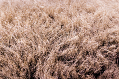fluffy tuft: fur texture close-up background on the white backgrounds Stock Photo