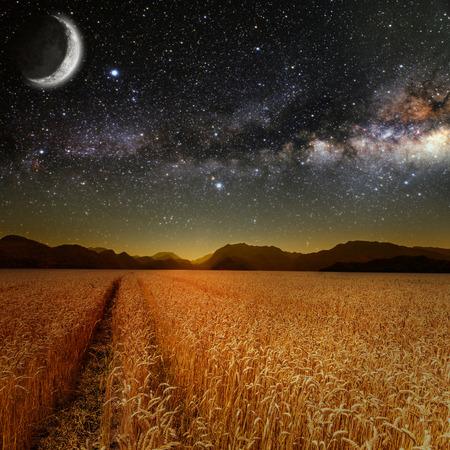 star field: field of grass. meadow wheat under stars sky.