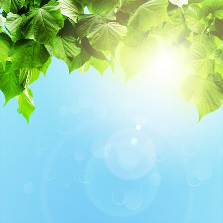 하늘에 봄 꽃 필드. 자연 추상