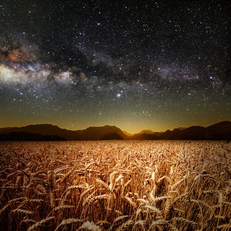 cultivo de trigo: campo de hierba. prado de trigo bajo las estrellas del cielo. Los elementos de esta imagen proporcionada por la NASA