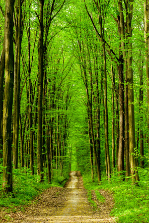 green backgrounds: forest trees. nature green wood sunlight backgrounds. sky