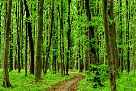 nature green: �rboles forestales. naturaleza madera verde luz del sol fondos. cielo