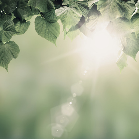 nature of sunlight: Vintage spring forest trees leaf. nature green wood sunlight backgrounds.