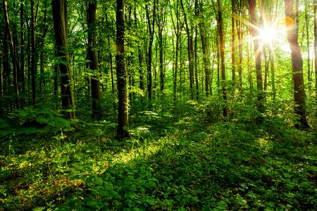 RBoles forestales. naturaleza de la madera verde, la luz del sol fondos. Foto de archivo - 45064788