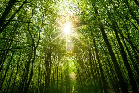 夏の森の木。自然の緑の木日光の背景。空 写真素材