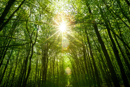beautiful scenery: summer forest trees. nature green wood sunlight backgrounds. sky