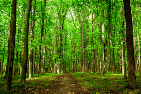 zomer bos bomen. natuur groen hout zonlicht achtergronden. hemel
