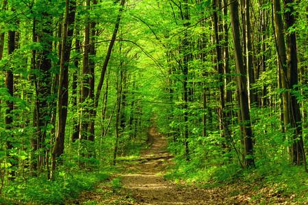 bos bomen. natuur groen hout zonlicht achtergronden. hemel