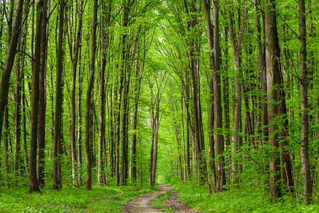 summer forest trees. nature green wood sunlight backgrounds. sky
