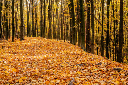 trailway: autumn forest trees. nature gold wood sunlight backgrounds. Stock Photo