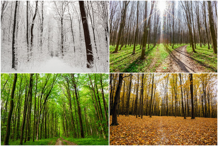 trailway: season forest wood  backgrounds.  Winter, Spring, Summer, Autumn