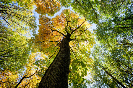 herbstliche Waldbäume. Natur grüne Holz Sonnenlicht Hintergründe. Standard-Bild