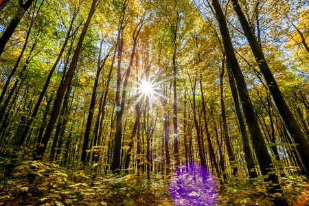 nature of sunlight: autumn forest trees. nature green wood sunlight backgrounds.