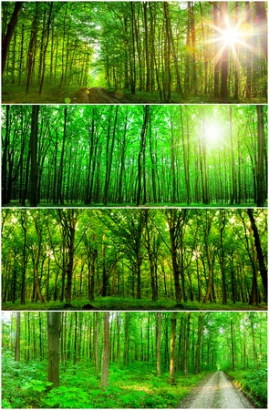 morning light: collection panorama forest trees. nature green wood sunlight backgrounds. Stock Photo