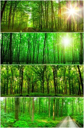 Sammlung Panorama Waldbäumen. Natur grün Holz Sonnenlicht Hintergründe.