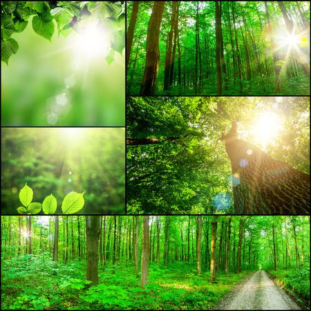 컬렉션 파노라마 숲 나무입니다. 자연 녹색 나무 햇빛 배경입니다.