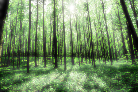 nature of sunlight: forest trees. nature green wood sunlight backgrounds. sky