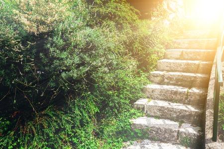 kamienne schody w zielonym ogrodzie