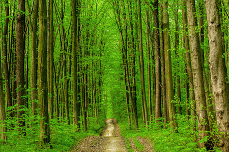 green backgrounds: spring forest trees. nature green wood sunlight backgrounds. sky Stock Photo