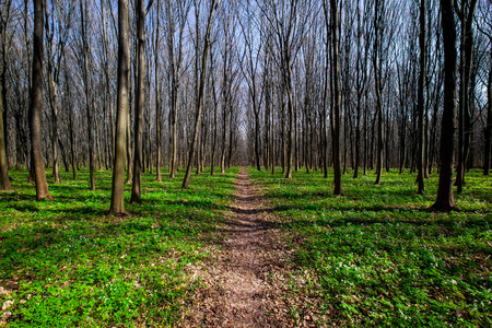 trailway: spring forest trees. nature green wood sunlight backgrounds. sky Stock Photo