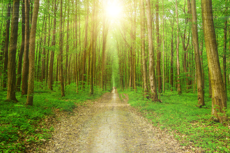 nature of sunlight: spring forest trees. nature green wood sunlight backgrounds. sky Stock Photo