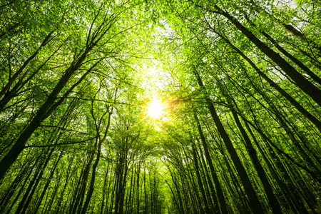 spring forest trees. nature green wood sunlight backgrounds. sky 免版税图像
