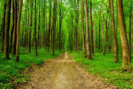 los árboles del bosque de la primavera. naturaleza madera verde luz del sol fondos. cielo