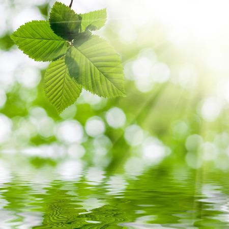 nelle foglie della foresta appesa sopra l'acqua su sfondi sole