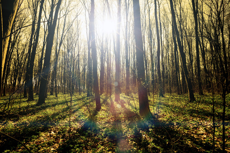 trailway: vintage spring forest trees. nature green wood sunlight backgrounds. sky