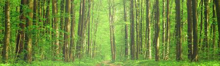 las drzewa wiosny. zieleni drewno światło słoneczne tła. niebo