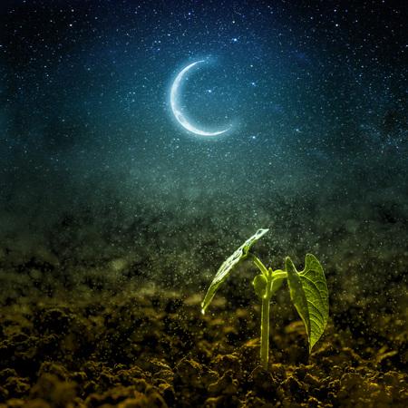 녹색 모 종 달과 별에 성장합니다.