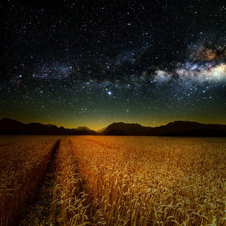 field crop: field of grass. meadow wheat under stars sky. Stock Photo