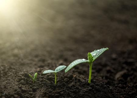 Zielona sadzonka rośnie na ziemi w deszczu. Zdjęcie Seryjne