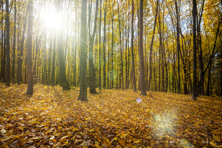 autumn forest trees. nature green wood sunlight backgrounds Stock Photo