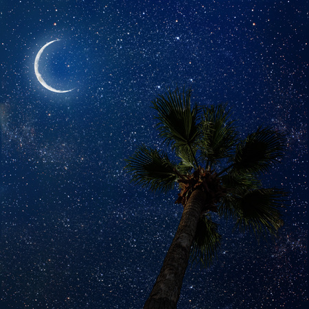 star sky: palm tree in the night sky with stars and moon.