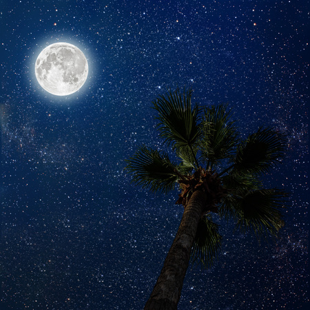 stars night: palm tree in the night sky with stars and moon.