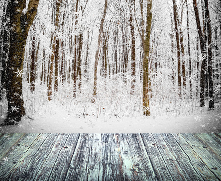 forest trees: winter forest trees. nature snow wood backgrounds. Stock Photo