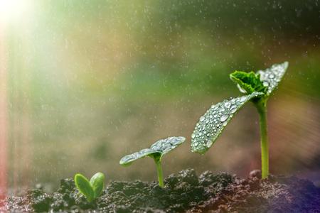 緑の苗が地上では雨の中で成長しています。ビジネスのため