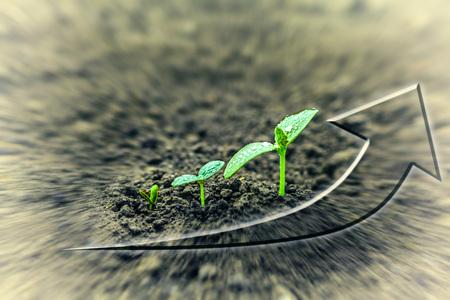diagrama de arbol: plántulas verdes que crecen en el suelo bajo la lluvia. para el negocio