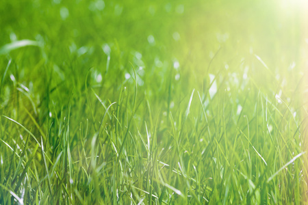 a backgrounds green grass  Stock Photo