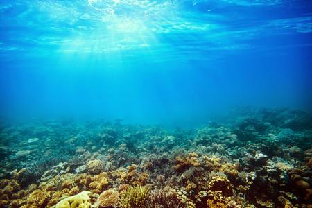 Bajo los arrecifes de coral en el mar rojo