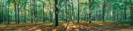 Autumn forest trees. 写真素材