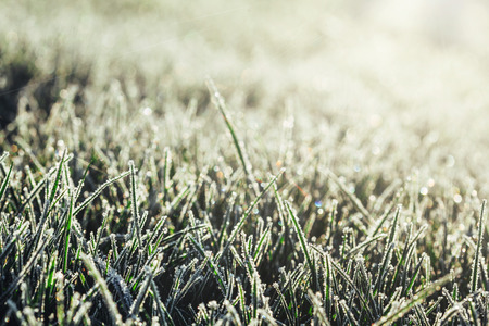 a green grass in frost Stock Photo
