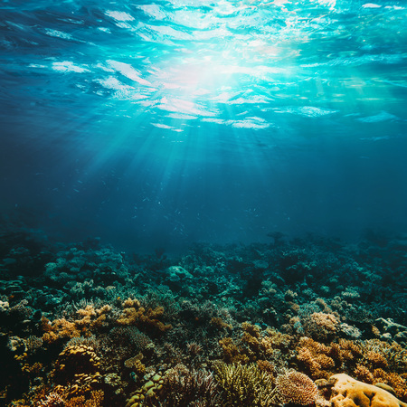 Underwater coral reef on the red sea 写真素材